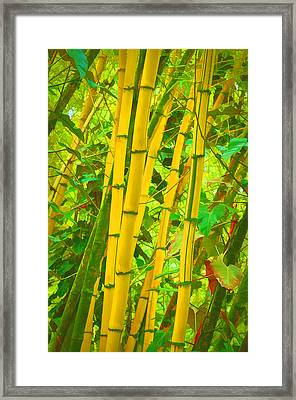 Bamboo Trees Framed Print by Art Brown