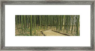 Bamboo Trees On Both Sides Of A Path Framed Print by Panoramic Images