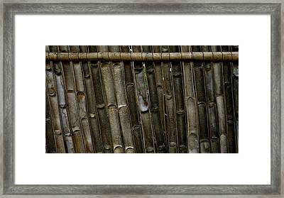 Bamboo Underside Wall Framed Print