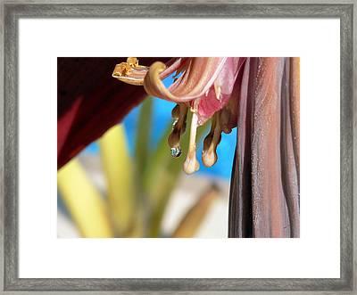Banana Blossoms Framed Print