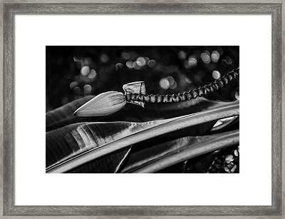 Banana Bokeh Framed Print