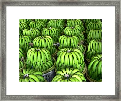 Banana Bunch Gathering Framed Print