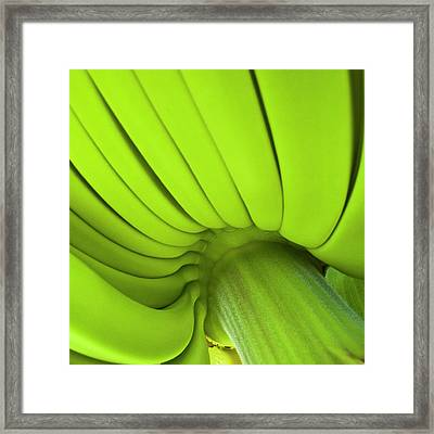 Banana Bunch Framed Print by Heiko Koehrer-Wagner