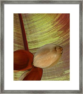 Banana Composition I Framed Print