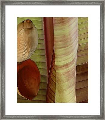 Banana Composition II Framed Print