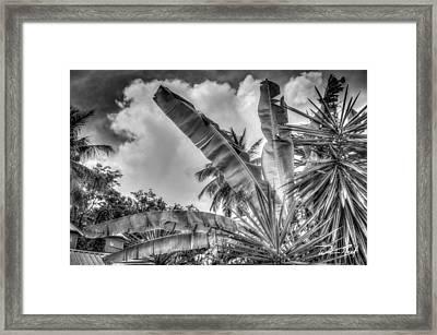 Banana Fan Bw Framed Print by William Reek