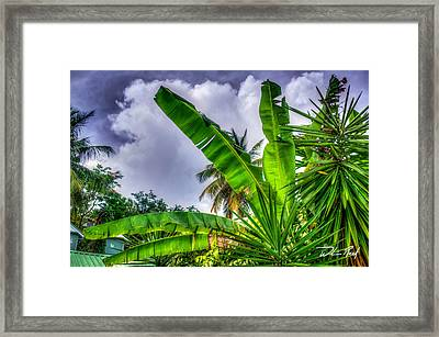 Banana Fan Framed Print by William Reek