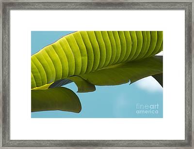 Banana Leaf And Maui Sky Framed Print by Sharon Mau