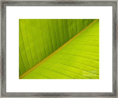 Banana Leaf Diagonal Pattern Close-up Framed Print by Anna Lisa Yoder