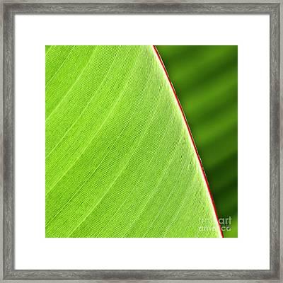 Banana Leaf Framed Print by Heiko Koehrer-Wagner