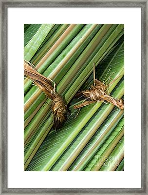 Banana Leaves Framed Print by Rick Piper Photography