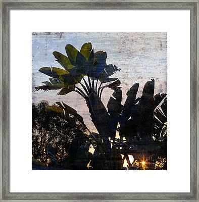 Banana Palms Framed Print