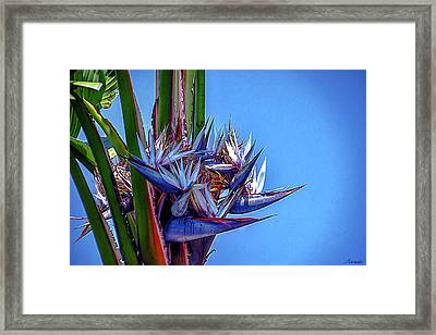 Banana Tree Daylight 3 Framed Print by Renee Anderson