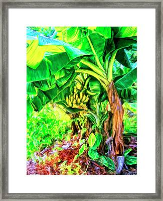 Bananas In Lahaina Maui Framed Print