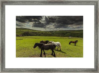 Band Of Horses Framed Print by Chris Fletcher