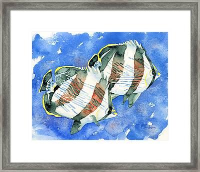 Banded Butterflyfish Framed Print