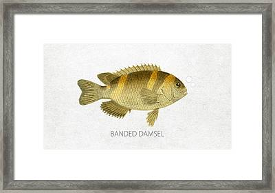 Banded Damsel Framed Print by Aged Pixel