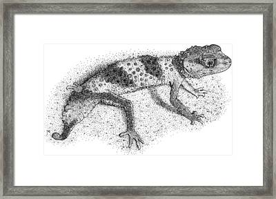 Banded Knob Tailed Gecko Framed Print by Roger Hall