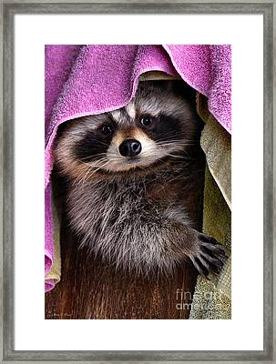 Bandit Framed Print by Adam Olsen