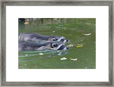 Synchronized Swimming Framed Print