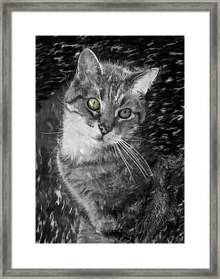 Bandit Monochrome Framed Print by Steve Harrington