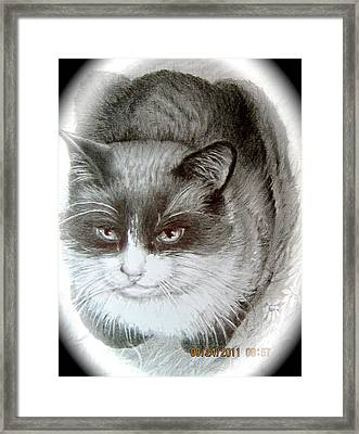 Framed Print featuring the painting Bandit by Patricia Schneider Mitchell