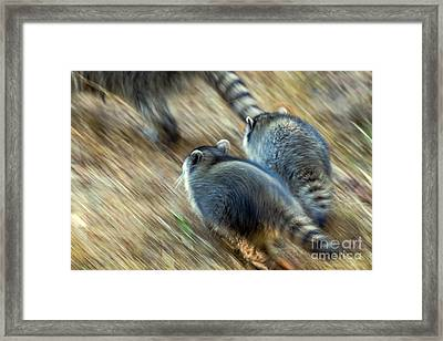 Bandits On The Run Framed Print