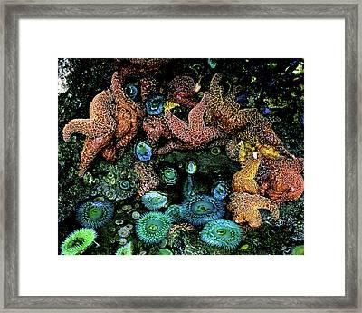 Bandon Beach Oregon Pacific Tidal Pool Framed Print