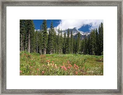 Framed Print featuring the photograph Banff Wildflowers by Chris Scroggins