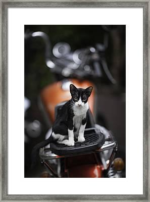 Bangkok Cat Framed Print by David Longstreath