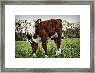 Banjo And Lucy Framed Print
