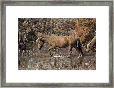 Banker Ponies Framed Print by Betsy Knapp