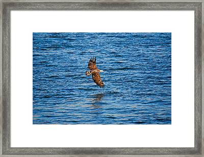 Banking Eagle Framed Print