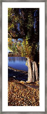 Banks Of Lake Wakatipu, Queenstown Framed Print by Panoramic Images