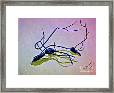 Framed Print featuring the painting Banksia Abstraction by Leanne Seymour