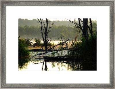 Banner Marsh Spring Framed Print