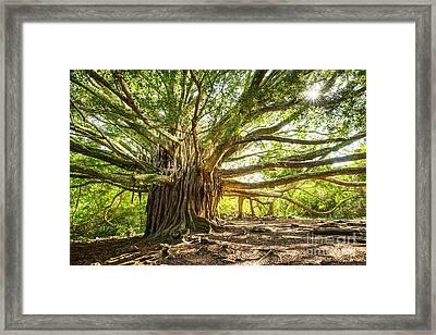 Banyan Star Framed Print by Jamie Pham