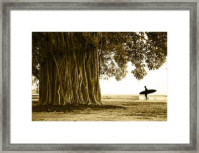 Banyan Surfer Framed Print by Sean Davey