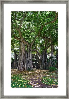 Banyan Tree At Honolulu Zoo Framed Print
