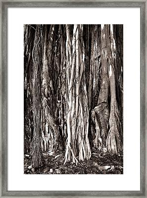 Banyan Tree Framed Print by James David Phenicie
