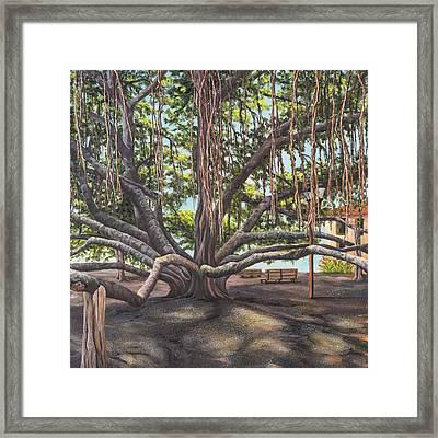 Banyan Tree Lahaina Maui Framed Print by Darice Machel McGuire