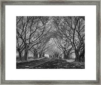 Banyan Tree Lined Road Framed Print