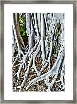 Banyan Tree  Framed Print