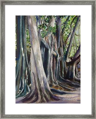 Banyan Trees Framed Print by Karol Wyckoff