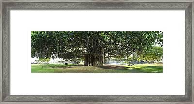 Banyon Glow Framed Print by Sean Davey
