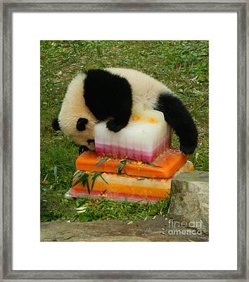 Bao Bao Climbing Mt. Saint Birthday Cake Framed Print by Emmy Marie Vickers