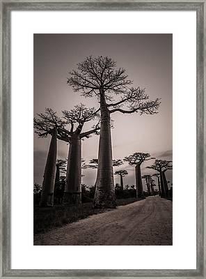 Baobab Avenue Framed Print by Linda Villers