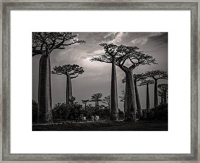 Baobab Highway Framed Print