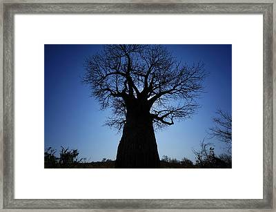 Baobab In The Okavango Delta Botswana Framed Print by Hiroya Minakuchi