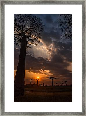 Baobab Sunrays Framed Print